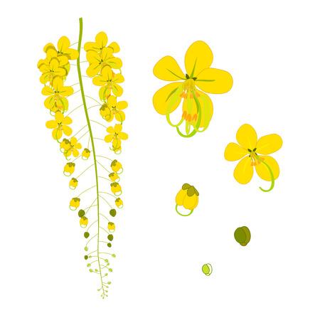 Cassia Fistula - Gloden Shower Flower Vector Illustration 向量圖像