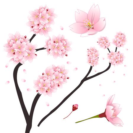 Contorno De Prunus Serrulata - Flor De Cerezo, Sakura. Flor Nacional ...