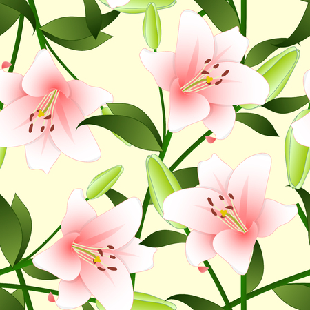 lilium: Lilium candidum, the Madonna lily or Pink Lily on Beige Ivory Background. Vector Illustration.
