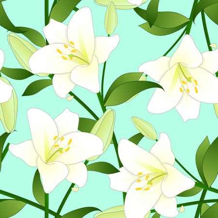 Lilium candidum, the Madonna lily or White Lily on Green Mint Background. Vector Illustration. Illustration