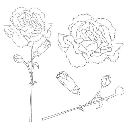 Dianthus caryophyllus Outline - Carnation Flower, Clove Pink. National flower of Spain, Monaco, and Slovenia. Vector Illustration. isolated on white Background. Illustration