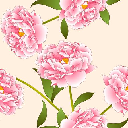 Pink Peony Flower on Beige Ivory Background. Vector Illustration.