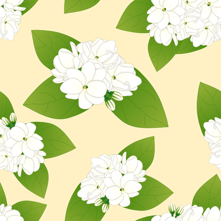 Arabian Jasmine on Yellow Ivory Background. Vector Illustration. Illusztráció