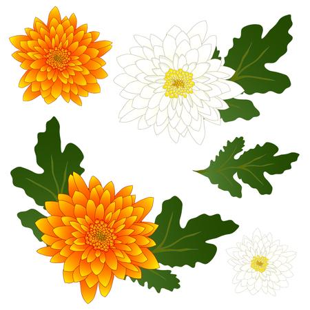 黄色と白の菊の花