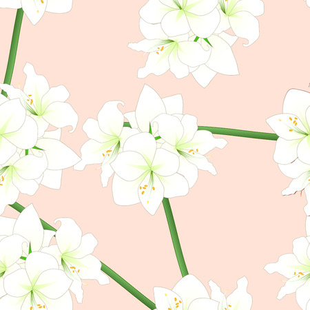White Amaryllis on Light Pink Orange Background. Vector Illustration.