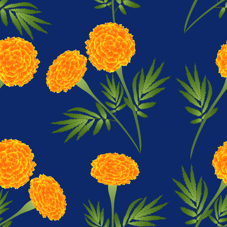 Orange Marigold on Indigo Blue Background. Vector Illustration.