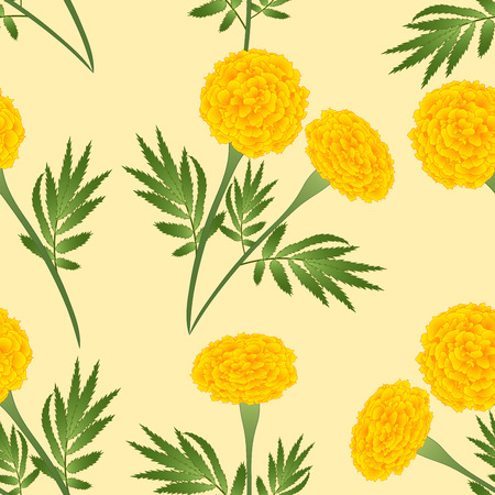 Yellow Marigold on Ivory Beige Background. Vector Illustration.