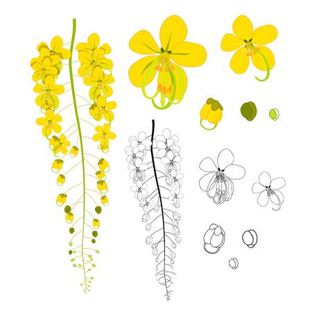 Cassia Fistula - Golden Shower Flower isolated on White Background. Vector Illustration. Illustration