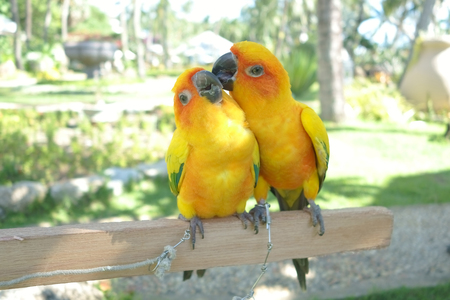 Lovebird Couple Colorful Parrot. in the Zoo. Stock Photo