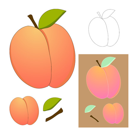 Cute Peach isolated on White Background. Vector illustration. Illustration
