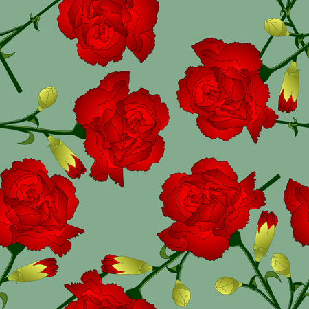 Dianthus caryophyllus - Red Carnation Flower on Green Background. Vector Illustration.