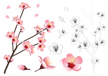 プルナスペルシカ - 桃の花の輪郭。ベクトルイラストレーション。白い背景に隔離されています。  イラスト・ベクター素材