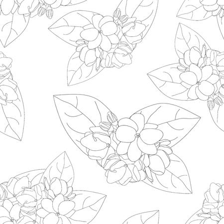 Arabian Jasmine on White Background. Vector Illustration. Illustration