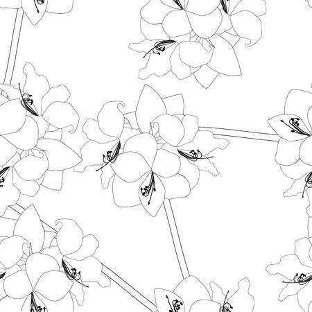 Amaryllis on White Background. Christmas Day. Vector Illustration.