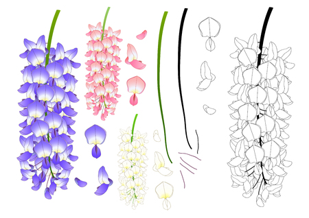 Violet, blue, pink and white wisteria illustration.
