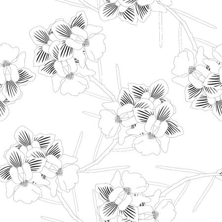 Vanda Miss Joaquim Orchid.   on White Background. Vector Illustration.