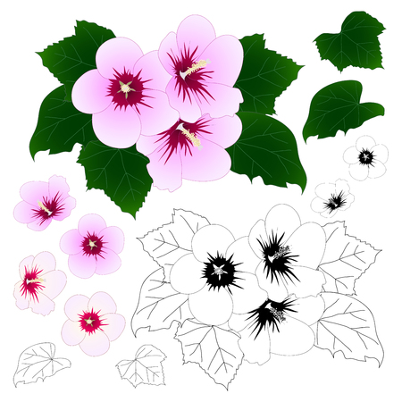 Hibiscus syriacus - Rose of Sharon Outline. Vector Illustration. isolated on White Background. Ilustracja