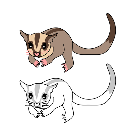 Cute Sugar Glider. Vector Illustration. isolated on White Background. Ilustracja