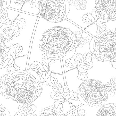 Ranunculus Flower on White Background. Vector Illustration.