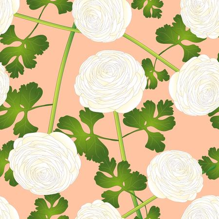 White Ranunculus Flower on Salmon Pink Background. Vector Illustration. Illustration