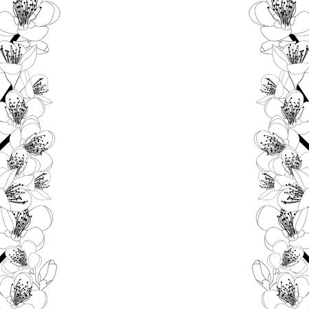 Prunus persica - Peach Flower Blossom Outline Border isolated on white Background. Vector Illustration.