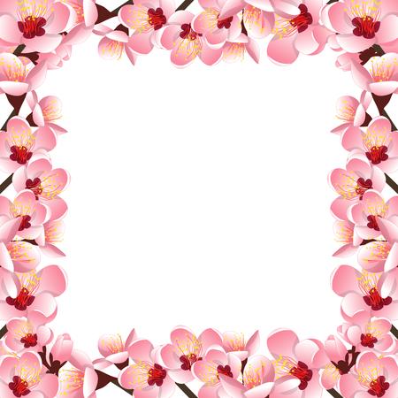 Prunus persica - Peach Flower Blossom Border isolated on white Background. Vector Illustration.