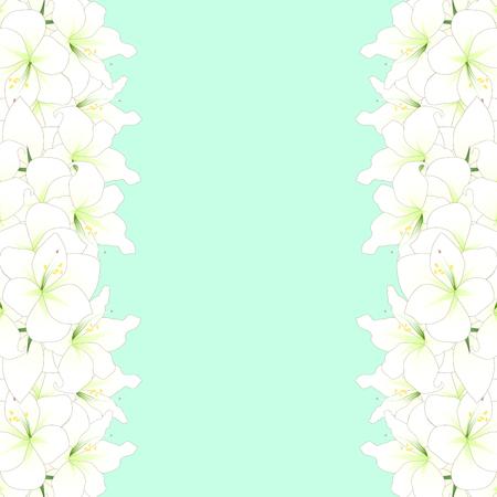White Amaryllis Border - Hippeastrum. Christmas Flower. Vector Illustration. isolated on Green Mint Background. Illustration