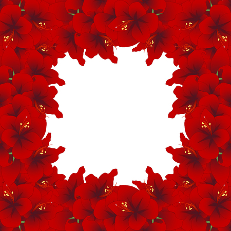 Red Amaryllis Border - Hippeastrum. Christmas Flower. Vector Illustration. isolated on White Background.