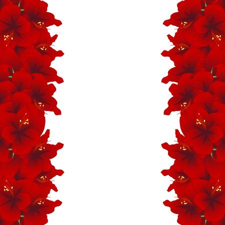Red Amaryllis Border - Hippeastrum. Christmas Flower. Vector Illustration. isolated on White Background. Foto de archivo - 103938388