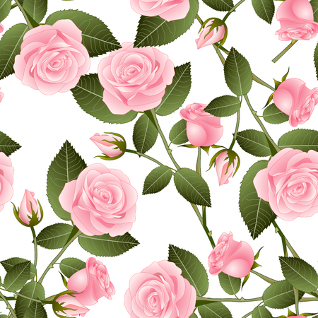 Beautiful Pink Rose - Rosa on White Background. Valentine Day. Vector Illustration.