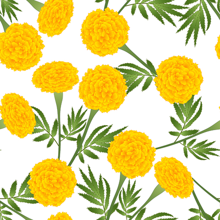 Yellow Marigold on White Background. Vector Illustration. Vettoriali