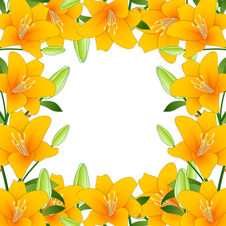 Orange Lilium candidum, the Madonna lily Border on White Background. Vector Illustration. 일러스트