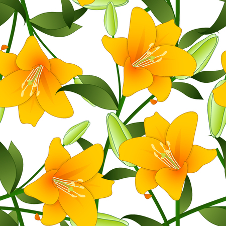 Lilium candidum, the Madonna lily or Orange Lily on White Background. Vector Illustration.