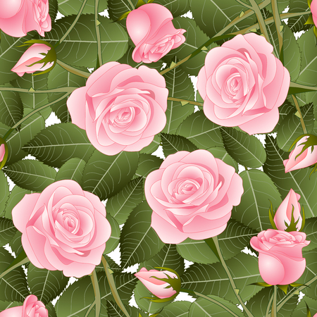 Pink Rose and Green Leaves on White Background. Vector Illustration.