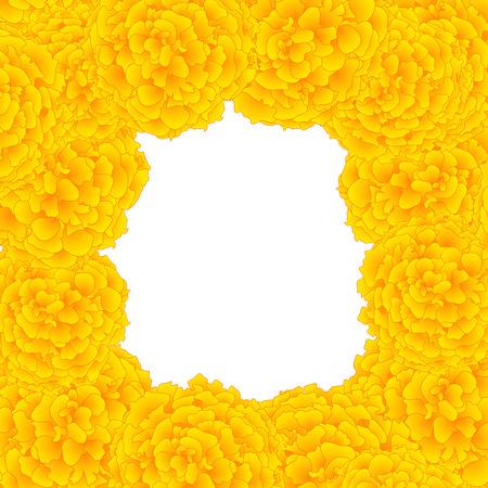 Yellow Marigold Border isolated on White Background. Vector Illustration.