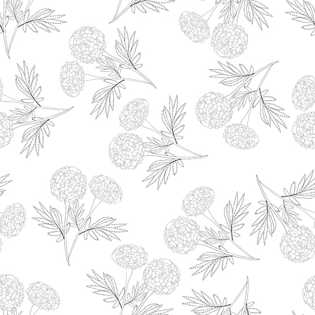 Marigold Outline Seamless on White Background. Vector Illustration.
