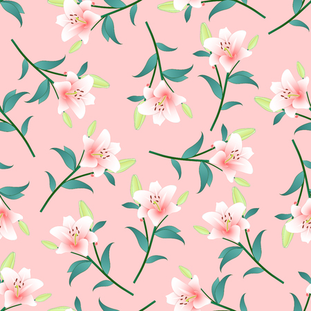 Lilium candidum, the Madonna lily or Pink Lily on Pink Background. Vector Illustration.
