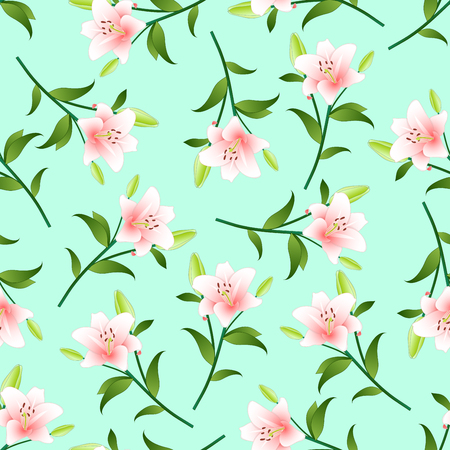 Lilium candidum, the Madonna lily or Pink Lily on Green Mint Background. Vector Illustration. Çizim