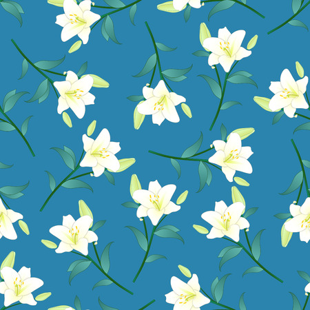 Lilium candidum, the Madonna lily or White Lily on Blue Background. Vector Illustration.