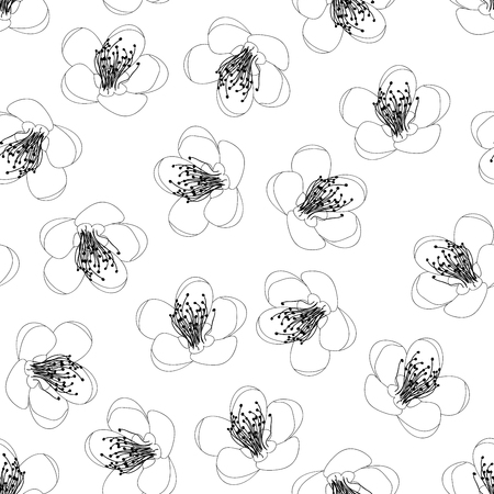 Prunus persica - Peach Flower Blossom Outline on White Background. Vector Illustration.