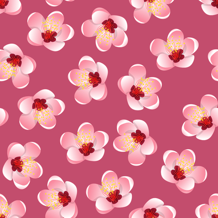 Prunus persica - Peach Flower Blossom on Pink Background. Vector Illustration.