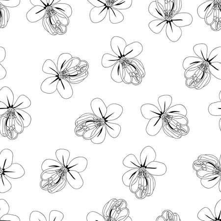 Cassia Fistula - Golden Shower Flower Outline on White Background. Vector Illustration