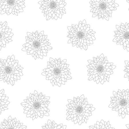 Chrysanthemum Outline on White Background. Vector Illustration.