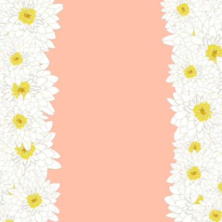 White Chrysanthemum Border isolated on Pink Background. Vector Illustration. Çizim