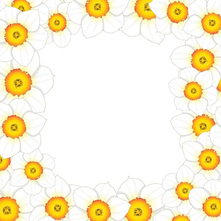 White Daffodil - Narcissus Flower Border. Vector Illustration.