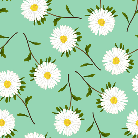 White Aster, Daisy on Green Background. Vector Illustration.
