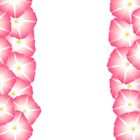 Pink Morning Glory Flower Border. Vector Illustration.