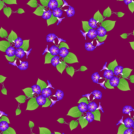 Purple Morning Glory on Violet Background. Vector Illustration. Иллюстрация