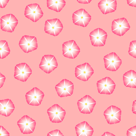 Pink Morning Glory Flower on Pink Background. Vector Illustration.