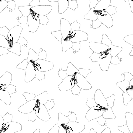 Lilium candidum, the Madonna lily or White Lily Outline Background. Vector Illustration.